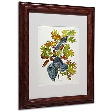 Trademark Fine Art 'Canada Jay' 11