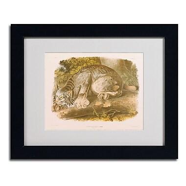 Trademark Fine Art 'Canada Lynx' 11