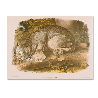 Trademark Fine Art 'Canada Lynx' 14