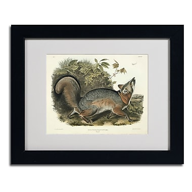 Trademark Fine Art 'Canis Virginianus'