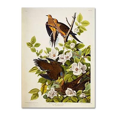 Trademark Fine Art 'Carolina Turtledove' 14