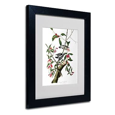 Trademark Fine Art 'Downy Woodpecker' 11