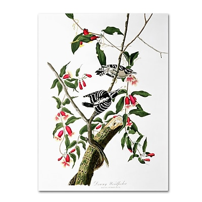 Trademark Fine Art 'Downy Woodpecker' 18