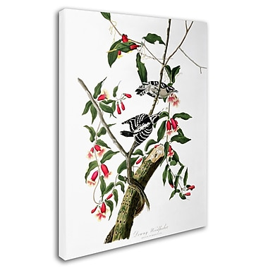 Trademark Fine Art 'Downy Woodpecker' 35