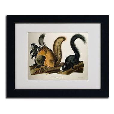Trademark Fine Art 'Fox Squirrel' 11