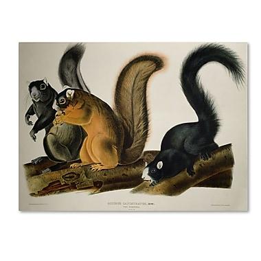 Trademark Fine Art 'Fox Squirrel' 14