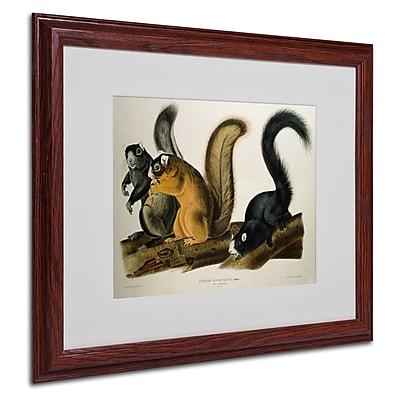 "Trademark Fine Art 'Fox Squirrel' 16"" x 20"" Wood Frame Art"