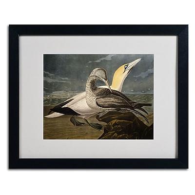 Trademark Fine Art 'Gannets' 16
