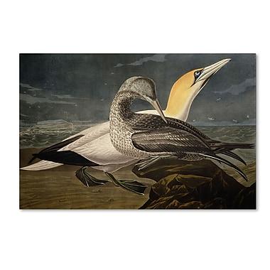 Trademark Fine Art 'Gannets' 22