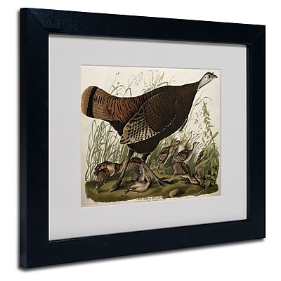 Trademark Fine Art 'Great American Hen and Young' 11