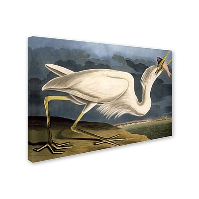 Trademark Fine Art 'Great White Heron' 30