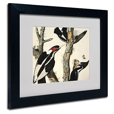 Trademark Fine Art 'Ivory-Billed Woodpecker' 11