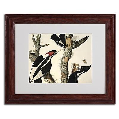 Trademark Fine Art 'Ivory-Billed Woodpecker' 11