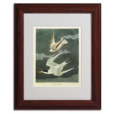 Trademark Fine Art 'Lesser Tern #44; Little Tern' 11