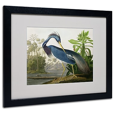 Trademark Fine Art 'Louisiana Heron' 16