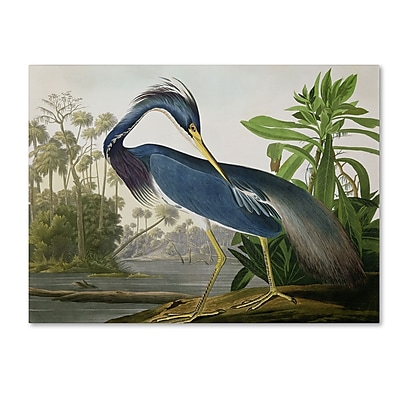 Trademark Fine Art 'Louisiana Heron' 35