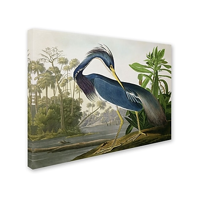 Trademark Fine Art 'Louisiana Heron' 18