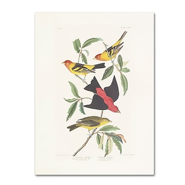 Trademark Fine Art 'Louisiana Tanager' 35