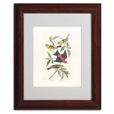 Trademark Fine Art 'Louisiana Tanager' 11
