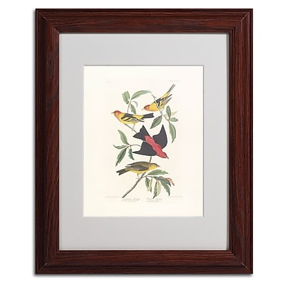 Trademark Fine Art 'Louisiana Tanager' 11