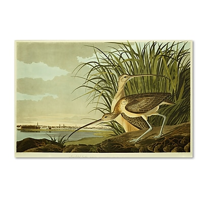 Trademark Fine Art 'Long Billed Curlew' 30