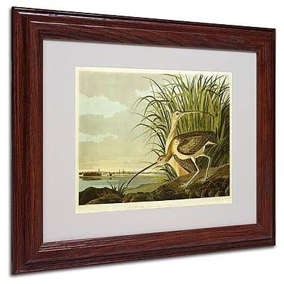 Trademark Fine Art 'Long Billed Curlew' 11