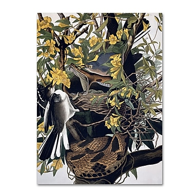 Trademark Fine Art 'Mocking Birds and Snake' 35