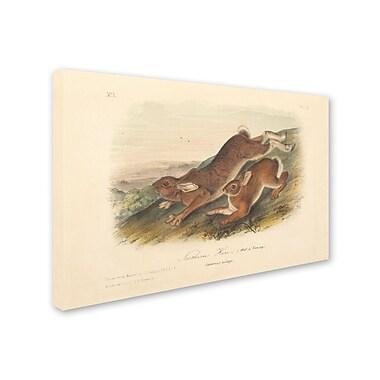 Trademark Fine Art 'Northern Hare' 22