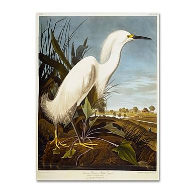 Trademark Fine Art 'Snowy Heron' 18