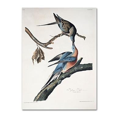 Trademark Fine Art 'Passenger Pigeon' 18