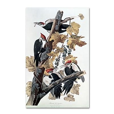 Trademark Fine Art 'Pileated Woodpeckers' 22