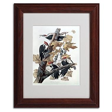 Trademark Fine Art 'Pileated Woodpeckers' 11