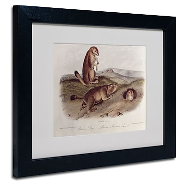 Trademark Fine Art 'Prairie Dog'