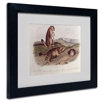 Trademark Fine Art 'Prairie Dog' 11