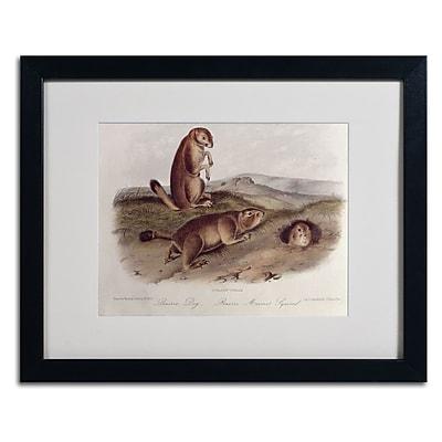 Trademark Fine Art 'Prairie Dog' 16