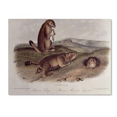 Trademark Fine Art 'Prairie Dog' 22