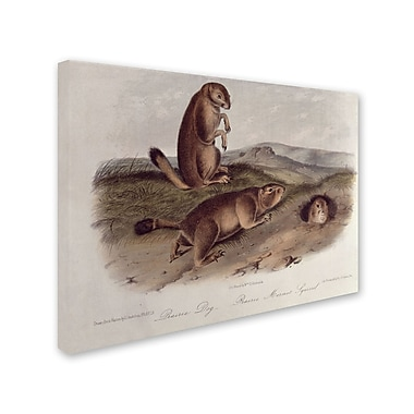 Trademark Fine Art 'Prairie Dog' 35