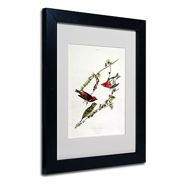 Trademark Fine Art 'Purple Finch'