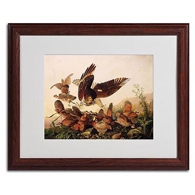 Trademark Fine Art 'Red-Shouldered Hawk' 16