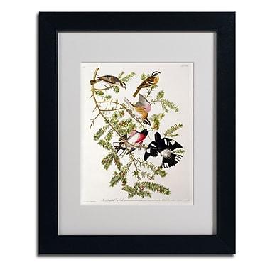 Trademark Fine Art 'Rose-Breasted Grosbeak'