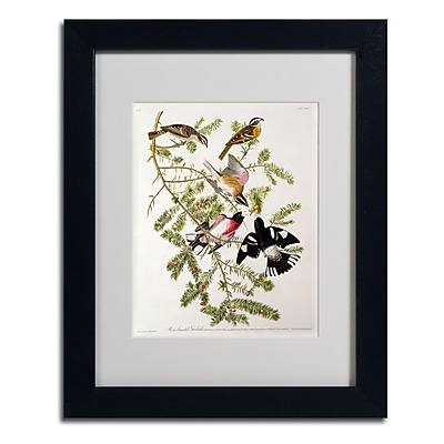 Trademark Fine Art 'Rose-Breasted Grosbeak' 11