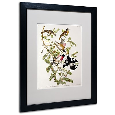 Trademark Fine Art 'Rose-Breasted Grosbeak' 16