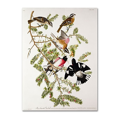 Trademark Fine Art 'Rose-Breasted Grosbeak' 35