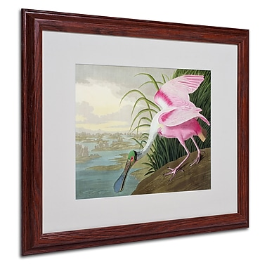 Trademark Fine Art 'Roseate Spoonbill' 16