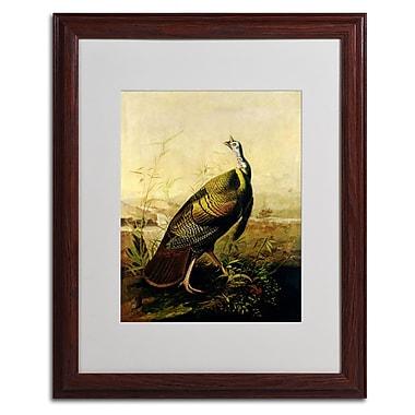 Trademark Fine Art 'American Wild Turkey Cock' 16