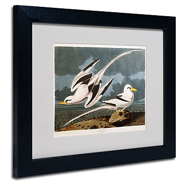 Trademark Fine Art 'Tropic Bird' 11