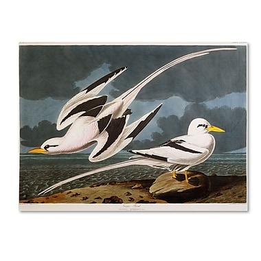 Trademark Fine Art 'Tropic Bird' 35