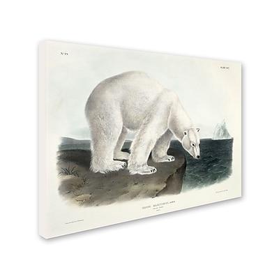 Trademark Fine Art 'Ursus Maritimus Polar Bear' 18