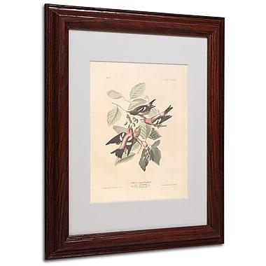 Trademark Fine Art 'White-Winged Crossbill' 11