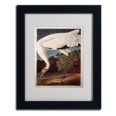 Trademark Fine Art 'Whooping Crane'